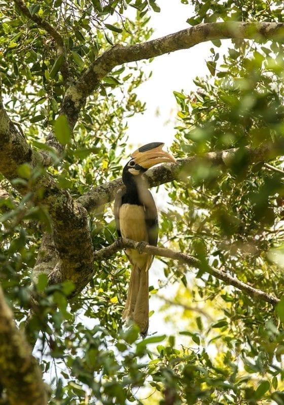 Sri Lanka Birdlife in Udawalawe National Park