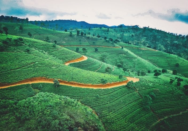 Tea Plantation Sri Lanka Aerial View