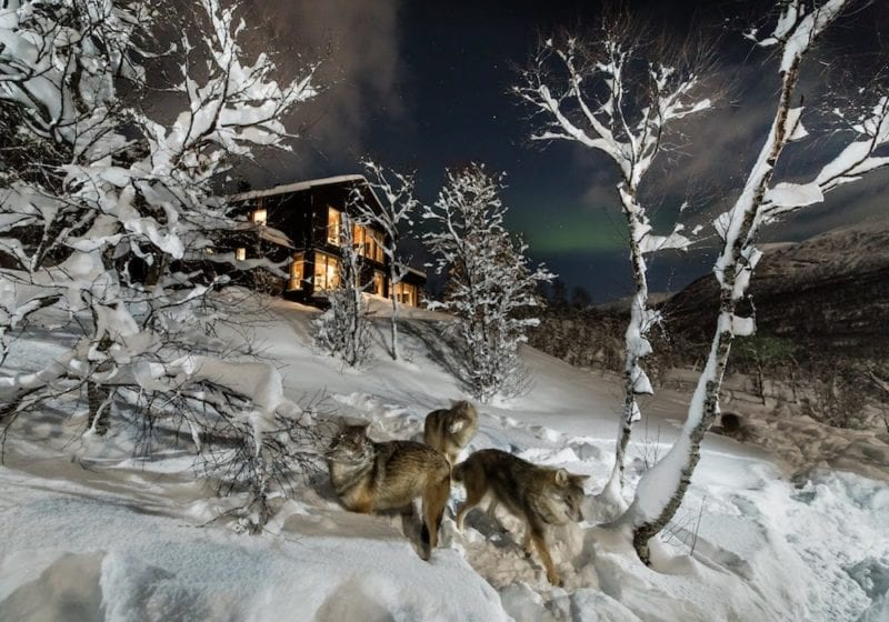 Wolf Lodge Snow at Night in Norway