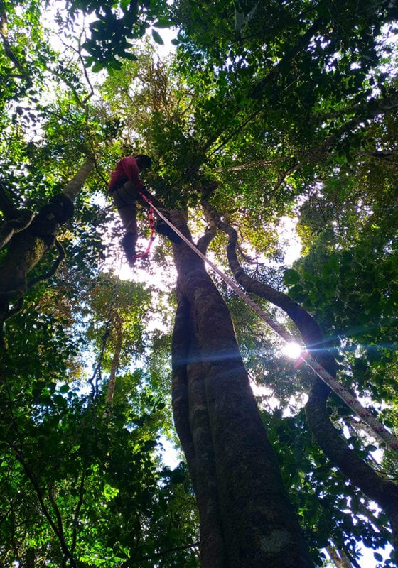 Bemanevika Tree Climbing in Madagascar