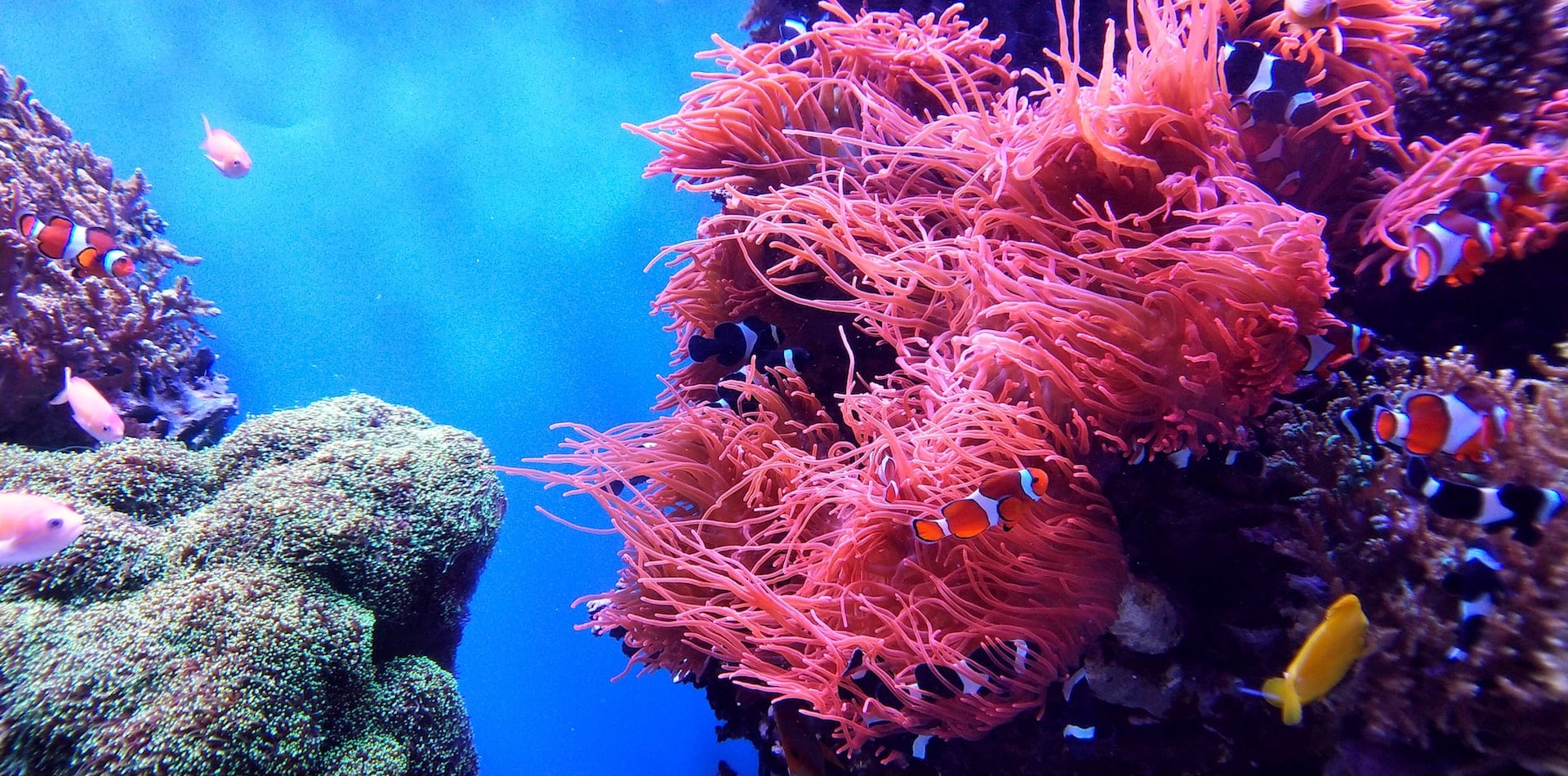 Colourful coral reefs to be explored off Africa