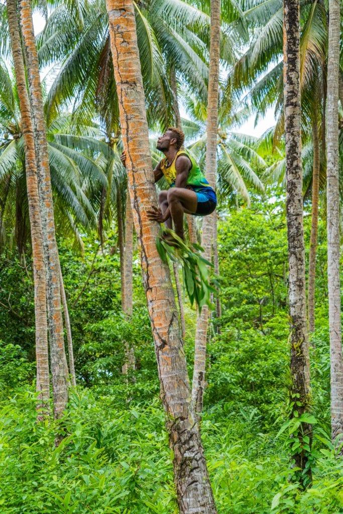 Palm Tree Climbing in Papua New Guinea