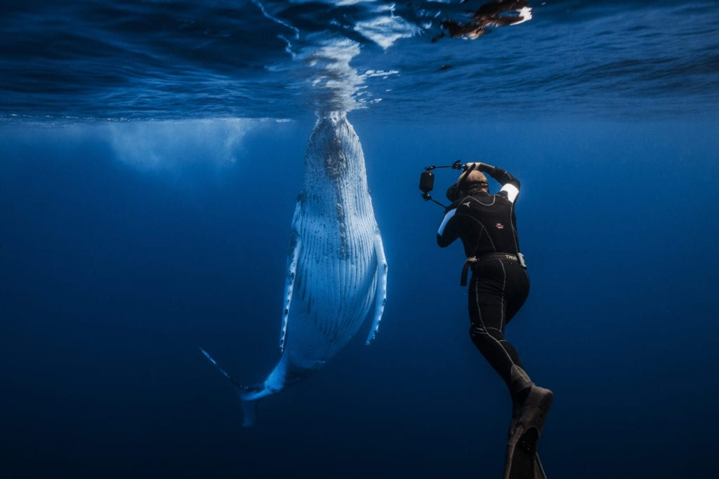 Photographing Whales in Madagascar