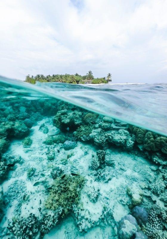 Image of half coral underwater, half tropical island