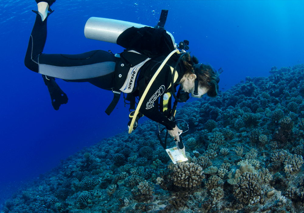 CoralWatch Coral Chart, Citizen Science