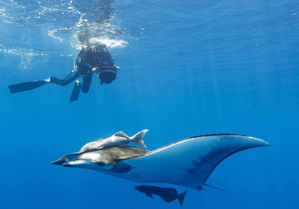 Diving Costa Rica, Pelagic Playground