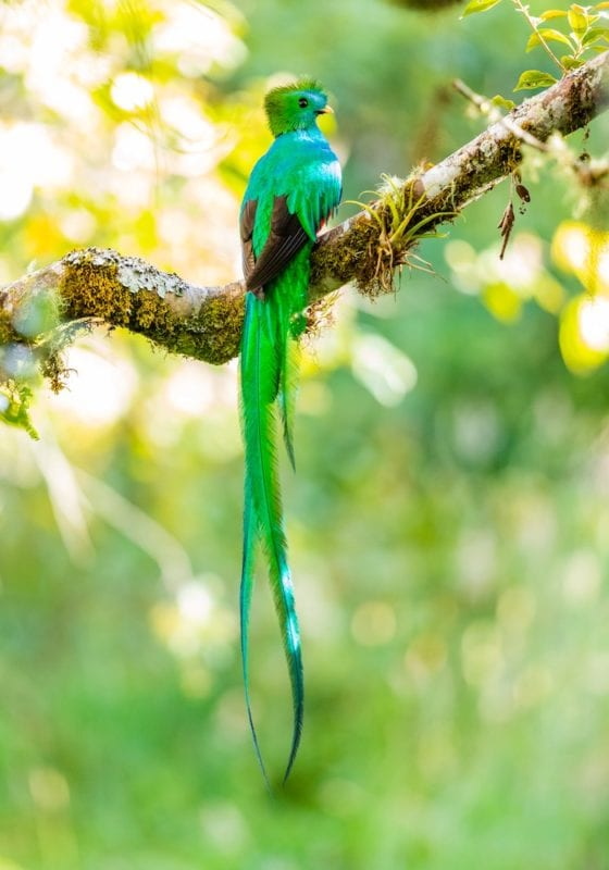 Exotic Bird, Costa Rica, Jungle