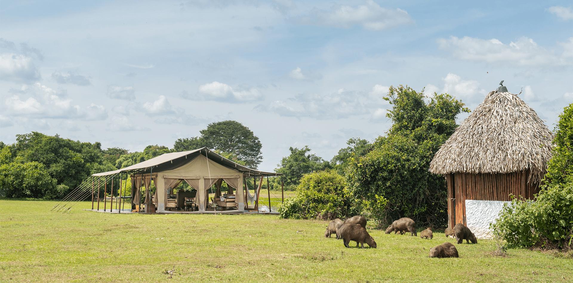 corocora wildlife camp exterior colombia