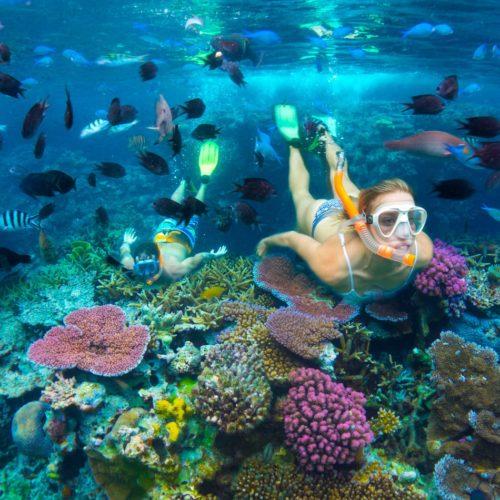 Snorkelling Coral Reef, Efate Activities, Vanuatu