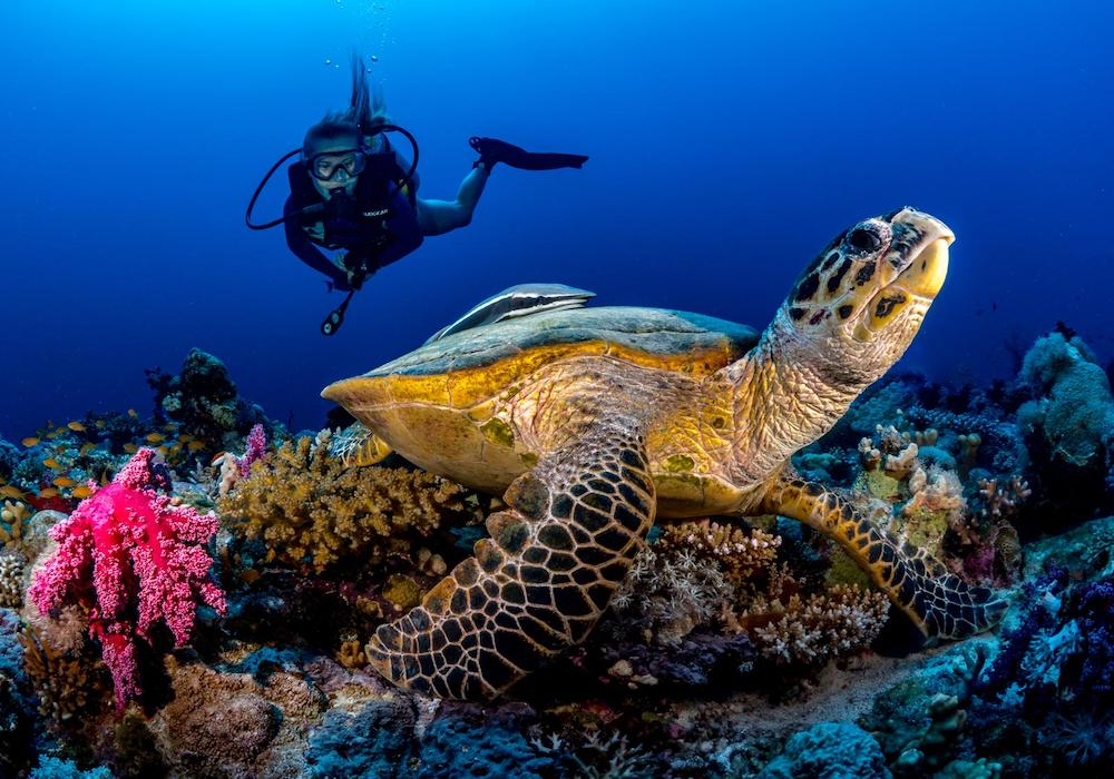 sea turtle conservation kirsty scott