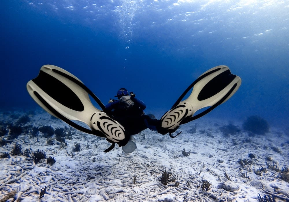 Scuba diving for ocean conservation in the Red Sea