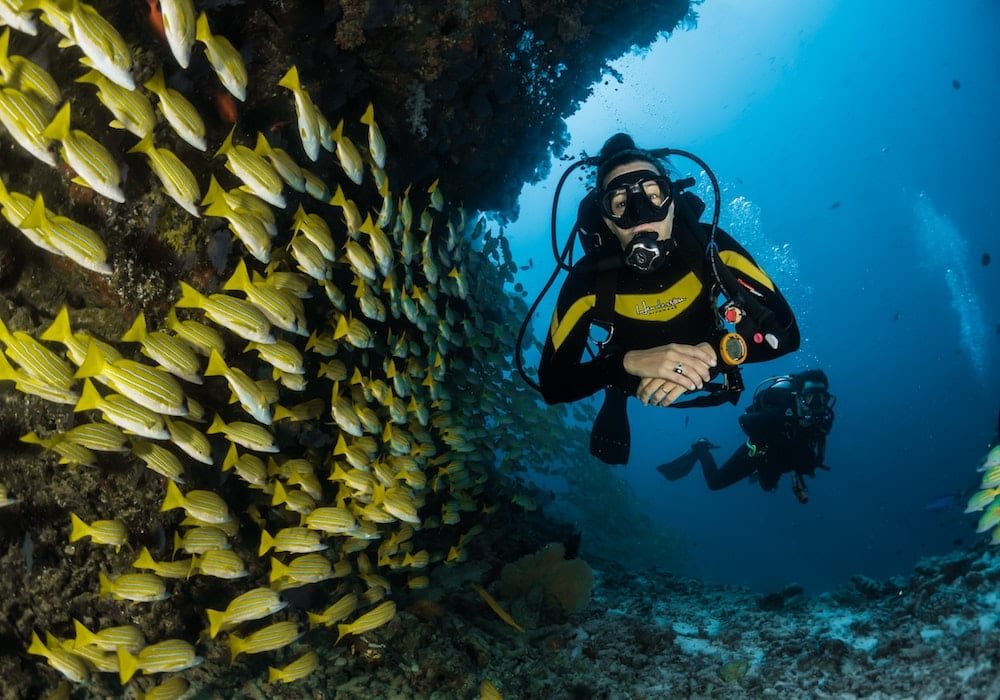 Scuba Diving with Shoals of Fish