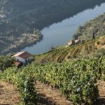 Hero Image Douro Valley Vineyards