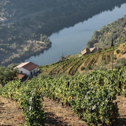 Hero Image Douro Valley Vineyards