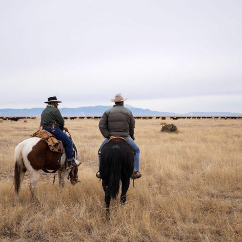 Horse Riding Chico Basin Ranch, Colorado