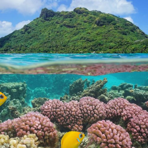 Tuamotus French Polynesia Underwater Life And Coral Hero Image